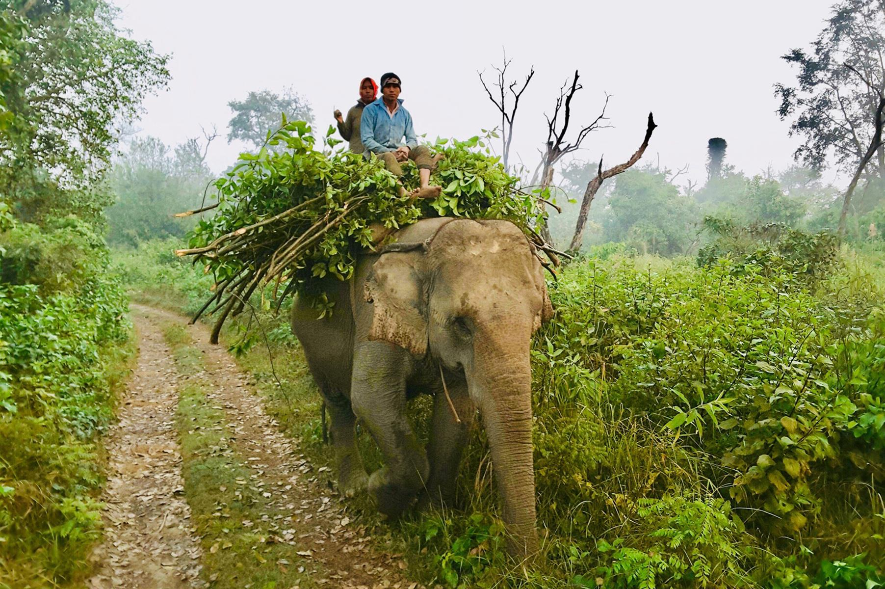 Bardia National Park – Bandipur – Lumbini